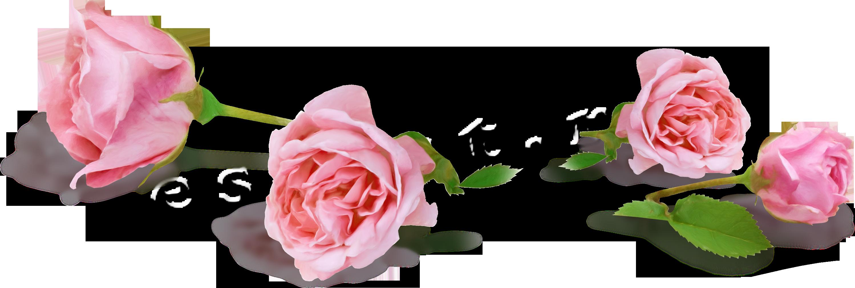 Как быстро высушить гербарий цветы